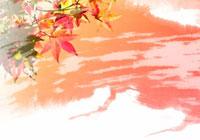 紅葉とペインティング(オレンジ色・白) 秋 10299000077  写真素材・ストックフォト・画像・イラスト素材 アマナイメージズ