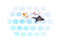 水玉模様と金魚