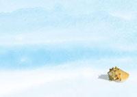 白浜の貝殻