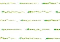 ヘビの罫線 10299000609| 写真素材・ストックフォト・画像・イラスト素材|アマナイメージズ