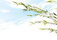 風をイメージした背景と若竹の枝