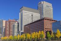 黄葉の街路樹と丸の内ビル群 10309000904| 写真素材・ストックフォト・画像・イラスト素材|アマナイメージズ