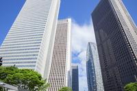 新緑の木立と高層ビル群,新宿副都心