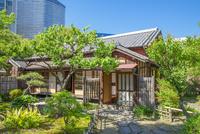 新緑の木立の家とビル群