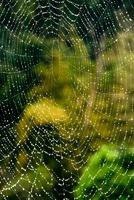 蜘蛛の糸と水滴