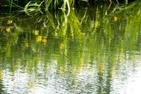 湧水 ひょこたん池公園