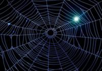 暗闇に光る蜘蛛の巣