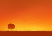 夕焼けと一本の木のシルエット