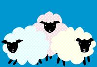 三頭の羊 10319000216| 写真素材・ストックフォト・画像・イラスト素材|アマナイメージズ
