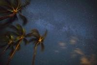 ヤシの木と天の川 10322000381| 写真素材・ストックフォト・画像・イラスト素材|アマナイメージズ