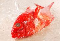 金目鯛 10323002250| 写真素材・ストックフォト・画像・イラスト素材|アマナイメージズ