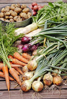 野菜集合 10323002633| 写真素材・ストックフォト・画像・イラスト素材|アマナイメージズ