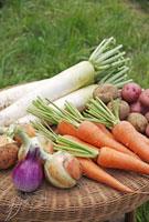 野菜集合 10323002635| 写真素材・ストックフォト・画像・イラスト素材|アマナイメージズ
