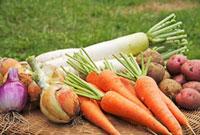 野菜集合 10323002739| 写真素材・ストックフォト・画像・イラスト素材|アマナイメージズ
