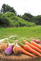 野菜集合 10323002742| 写真素材・ストックフォト・画像・イラスト素材|アマナイメージズ