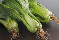 チンゲン菜 10323003089| 写真素材・ストックフォト・画像・イラスト素材|アマナイメージズ