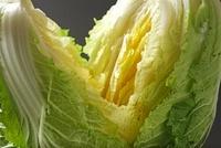 オレンジ白菜 10323004436| 写真素材・ストックフォト・画像・イラスト素材|アマナイメージズ