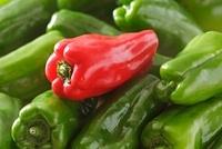 赤ピーマンと緑ピーマン 10323004711| 写真素材・ストックフォト・画像・イラスト素材|アマナイメージズ