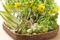 山菜と菜の花