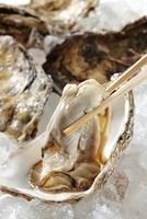 生牡蠣 10323004894| 写真素材・ストックフォト・画像・イラスト素材|アマナイメージズ