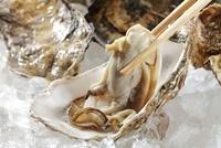 生牡蠣 10323004895| 写真素材・ストックフォト・画像・イラスト素材|アマナイメージズ