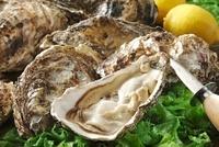 殻付き牡蠣 10323005042| 写真素材・ストックフォト・画像・イラスト素材|アマナイメージズ