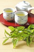 緑茶 10323005287  写真素材・ストックフォト・画像・イラスト素材 アマナイメージズ