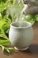 緑茶 10323005290  写真素材・ストックフォト・画像・イラスト素材 アマナイメージズ