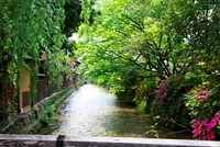 京都祇園白川 10330000333| 写真素材・ストックフォト・画像・イラスト素材|アマナイメージズ