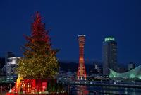 神戸港とクリスマスツリー