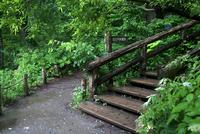 奥入瀬渓流の石ヶ戸休憩所 10330000860| 写真素材・ストックフォト・画像・イラスト素材|アマナイメージズ