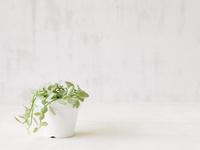 観葉植物  10331000105  写真素材・ストックフォト・画像・イラスト素材 アマナイメージズ