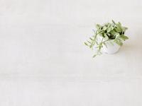 観葉植物  10331000107  写真素材・ストックフォト・画像・イラスト素材 アマナイメージズ
