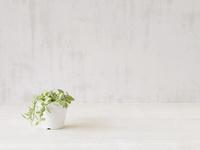 観葉植物  10331000122  写真素材・ストックフォト・画像・イラスト素材 アマナイメージズ
