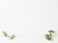 多肉植物とリボン