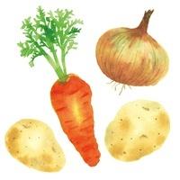カレーの野菜 10340000031| 写真素材・ストックフォト・画像・イラスト素材|アマナイメージズ