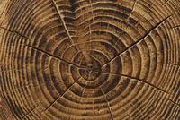 クヌギの年輪 10341000617| 写真素材・ストックフォト・画像・イラスト素材|アマナイメージズ