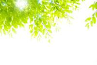 新緑 10341001434| 写真素材・ストックフォト・画像・イラスト素材|アマナイメージズ