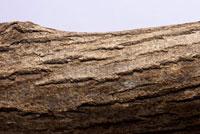 クヌギ 10341001883| 写真素材・ストックフォト・画像・イラスト素材|アマナイメージズ