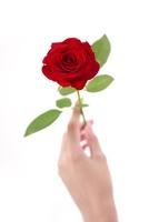 薔薇を持った女性の手