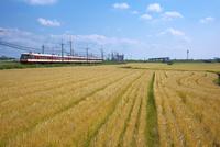 麦畑と電車