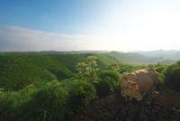 箱石峠の朝