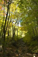 長者原から坊がツルへの登山道 10341009339| 写真素材・ストックフォト・画像・イラスト素材|アマナイメージズ