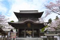 熊本県 阿蘇神社と桜