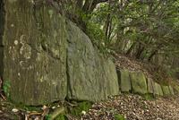 神籠石(こうごいし)