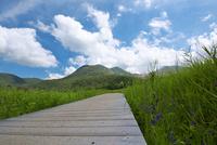 サワギキョウ咲くタデハラ湿原