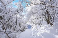 久住山登路の樹氷