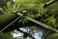 手水鉢 10341011183| 写真素材・ストックフォト・画像・イラスト素材|アマナイメージズ