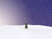 雪原のクリスマスツリー