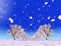 桜並木と桜吹雪